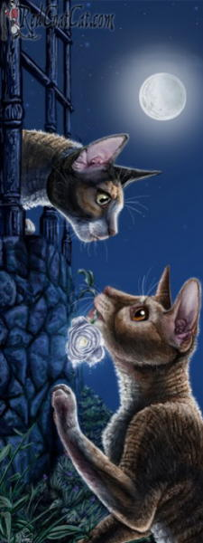 Painting of romantic cats. Tamara Meezer Gale