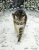 Tabby in the Snow - Celia Pike