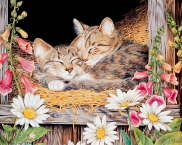 Kittens on Hay - Jane Maday
