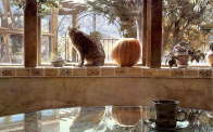Cat and the Pumpkin - Steve Hanks